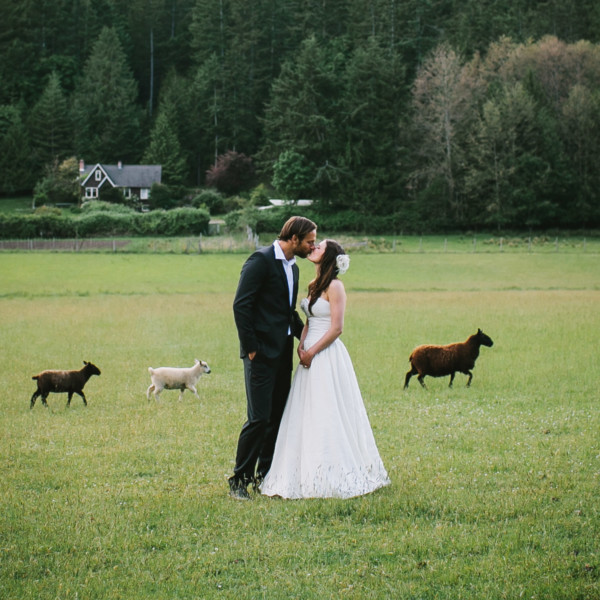 Love at a Seaside Sheep Farm Cottage