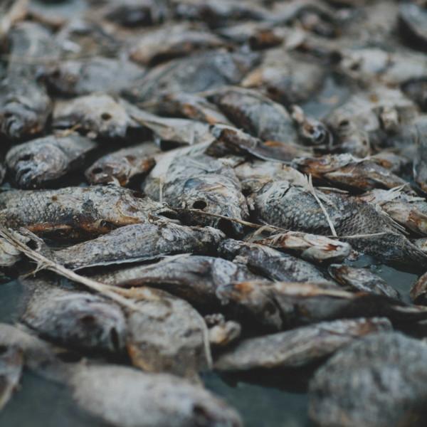 Fishbones & Film at the Salton Sea