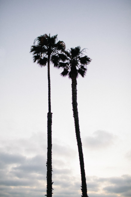 The Palms and the Pacific – Photo by Let's Frolic Together