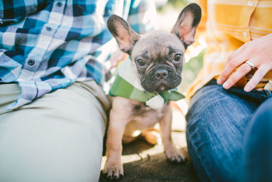 Forest Cuddles With a Frenchie – Photo by Let's Frolic Together