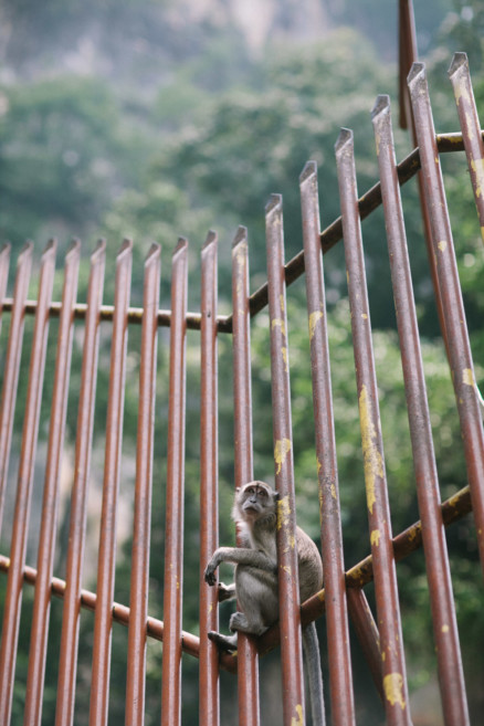 Monkeying Around in Malaysia – Photo by Let's Frolic Together