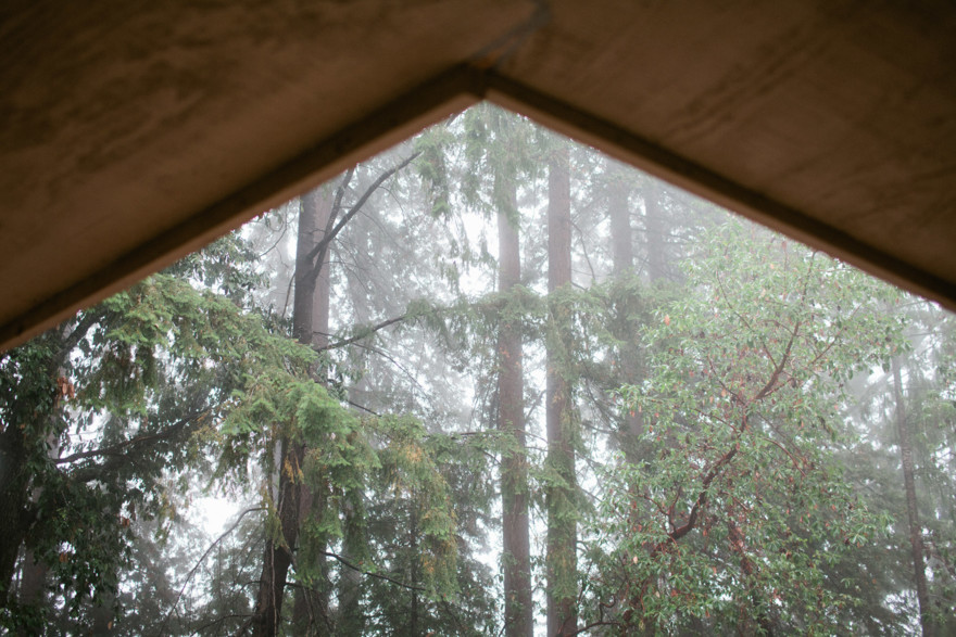 Dreamy Fog in the Redwoods – Photo by Let's Frolic Together