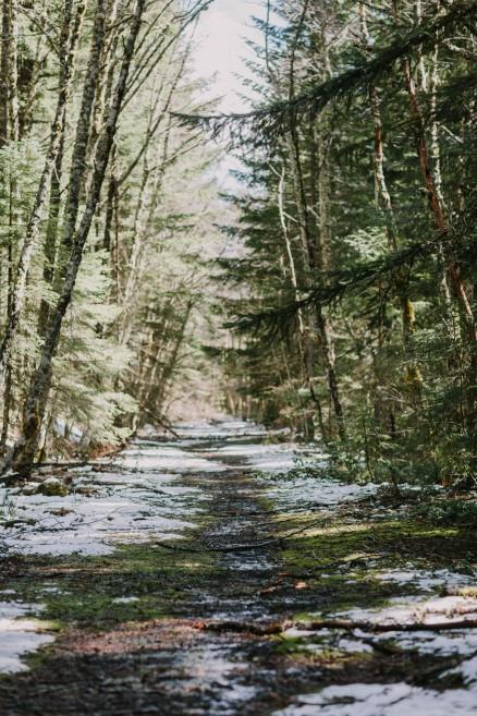 Springtime in Portland Oregon – Photo by Let's Frolic Together
