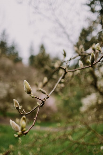 Springtime in Portland Oregon – Photo by Let's Frolic Together