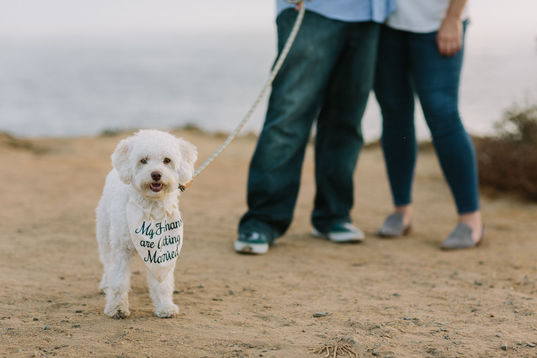 A Coastal Puppy Adventure – Photo by Let's Frolic Together