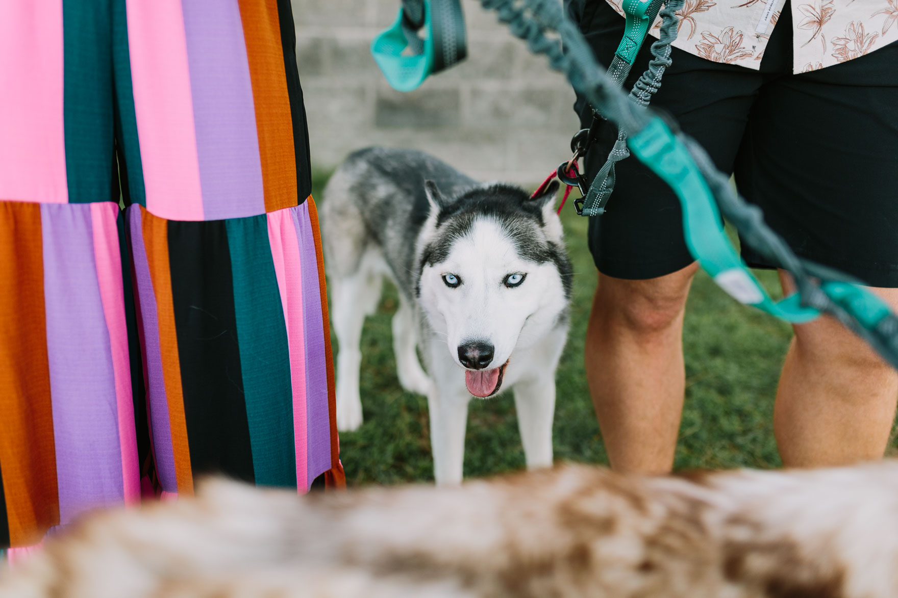 Huskies by the Sandy Shore – Photo by Let's Frolic Together